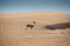 Desert Adventures (Miroslav Matusinsky) Tags: 4wheeldrive bellydancer desert dubaj falcon luxury