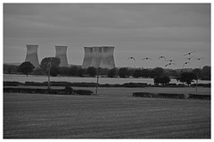 silent sentinels (Trev 'Big T' Hurley) Tags: derbyshire geese canadageese brantacanadensis willingtonpowerstation mono blackandwhite coolingtowers