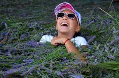 aprés la récolte la détente France_3856 (ichauvel) Tags: éclatderire joie fun happy rire smiling littlegirl fillette fille lavandes lavenders fleurs flowers senteur goodsmell aromatique été summer juillet july exterieur outside récolte harvest