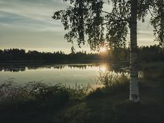 Iisalmi (Tuomo Lindfors) Tags: iisalmi suomi finland kangaslampi lampi pond vesi water aurinko sun auringonlasku sunset myiisalmi koivu birch theacademytreealley puu tree