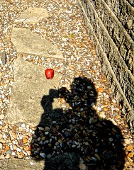 The Shadow of a Photographer Photographing an Apple (ricko) Tags: shadow apple photographer photographing werehere 213365 2018