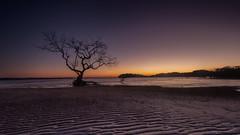 Salamander Bay Sunrise (RoosterMan64) Tags: australia landscape longexposure nsw portstephens salamanderbay seascaspe sunrise tree
