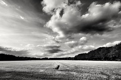 Alone (wimkappers) Tags: blackwhitephotos bnw bw monochrome people scenery sky dramatic dramaticsky clouds alone