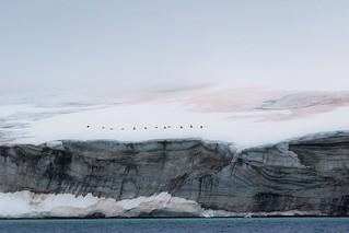 Alkefjellet, Svalbard