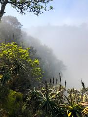 brume (mille_emmanuel) Tags: vertical nature nuage afrique afriquedusud verticale brume arbre