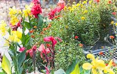 Garden Color  012 (LarryJay99 ) Tags: mountsbotanicalgardens nature westpalmbeach florida plants foliage urbanvegetation greenery light color