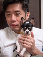 小嘟嘟 01 (enno7898) Tags: pet puppy f28 1240mm mzuiko olympus g9 lumixg9 lumix panasonic