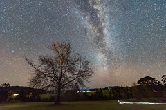 The Milky Way and Winter Tree (Merrillie) Tags: night glitter landscape milkyway astrophotography stars rural newsouthwales astro paddock nightsky country astronomy outside astrology tree gresford winter nsw sky outdoors australia