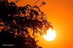 Another sunset shot (Fabke.be) Tags: sunset sunsets sunsetsky sun sunny zonsondergang zon soleil couchedusoleil orange orangesky nature natuur ronse vlaamseardennen vlaanderen mooi special explore inexplore canon7d canon7dmkii canon7dmk2 canon175528 canon1755mm28 silhouette tree boom bladeren silhouet