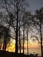 Sunset. (presteza777) Tags: sunset tramonto coucherdusoleil puestadelsol sun trees pink peterhof stpeterburg russia alexandria thegulfoffinland clouds sky selo coast silhouette nuabes nuvole nuages water sea seascape