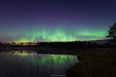 Northernlights (laurilehtophotography) Tags: suomi finland jyväskylä kivilampi summer 2018 northernlights auroraborealis auroras sky night stars reflections water pond trees swamp marsh nikon d750 sigma 20mm art wideangle longexposure nature landscape nightscape astronomy