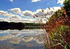 The reflection (Tobi_2008) Tags: teich pond spiegelung reflection wasser water natur nature landschaft landscape sachsen saxony deutschland germany allemagne germania