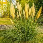 beautiful grasses thumbnail
