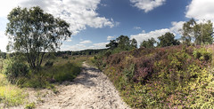 Surrey Heathland (Stephen Duffy Images) Tags: heathland canoneos5dmkiv irix15mmf24firefly panorama