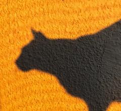 Sombra (Joaquínrod) Tags: fotografía gato cat sombra
