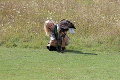 The Hawk Conservancy (Ian Macfadyen) Tags: hawk vulture birdofprey predator wings flight falconry falcon periodcostume kingqueen oldengland medievil owl barnowl birdinflight owlinflight barnowlinflight vultureinflight redkite blackkite kite soaring display diving countryside americanbaldeagle baldeagle eagle butterflynets beekeeping oldfashiondedpursuit summermeadow meadow wildflowers wildflowermeadow