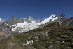 Depuis le grand col ferret (bulbocode909) Tags: valais suisse italie valferret grandcolferret montagnes nature paysages glaciers glacierdeprédebard pointeallobrogia montdolent grépillons pointedeprédebard domino triolet massifdumontblanc vert bleu frontières grandiose