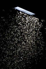 Ninfas (AdrianoSetimo) Tags: termites cupins cupim insect inseto luz sombra light shadow csvp colégiosãovicentedepaulo cosmevelho riodejaneiro lightpole poste mft microfourthirds m43 olympus em5mkii mk2 panasoniclumixgvario45200mmf4056 45200mm vario