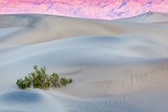 Sandy Morning in the Dunes (Kirk Lougheed) Tags: california deathvalley deathvalleynationalpark grapevinemountains mesquitedunes mesquiteflat usa unitedstates dune landscape mountain nationalpark outdoor park sand sanddune sunrise