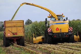 30 August 2018 maize harvest