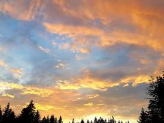 Sommer Sonnenuntergang. Summer Sunset. (st.klaus612) Tags: wolken clouds silhouette wald forest gelb yellow gold leutend leuchten bright orange sonne sun sommer oberpfalz upperpalatinate bayern bavaria blau blue bunt colorful shines glow