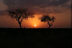 African Sunset (JH Byrne) Tags: sunset krugernationalparksouthafricajbyrnetreesnightdusksunmooncloud j john byrne fireball