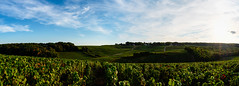 Vineyards (ZeGaby) Tags: champagne clouds hdr landscape marne naturephotography panoramic paysage pentax2470mm pentaxk1 sunset vignes vineyards