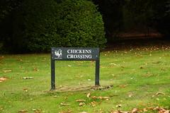DSC_1700 (PeaTJay) Tags: nikond750 langrishhousehotel hampshire manorhouse hotels gardens outdoors nature flora fauna plants trees bushes lakes grass grasses flowers