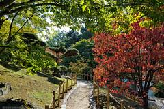 Japanese garden (kartix) Tags: japanesetuin japanesegarden hasselt belgium belgië bomen tuin trees garden