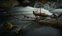Im Märchenwald ... in the fairy tale forest (Andreas Liwnskas) Tags: niedersachsen norddeutschland harz okertal lzb natur nature wasser germany deutschland detailaufnahme