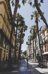 Streets of Málaga | Spain (Caroline Groneberg) Tags: spanien malaga andalusien palme stadt strasen