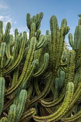 IMG_6697.jpg (Bri74) Tags: cactus jardinbotanico nature spain valencia