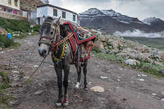 D4I_1498 (riccasergio) Tags: china cina tibet kailash xizangzizhiqu kora