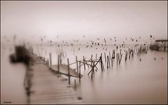 A world of dreams ... (Armelle85) Tags: extérieur nature paysage lagune eau ponton poteaux oiseaux mouettes matin