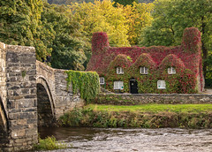 Tu Hwnt i'r Bont (mlomax1) Tags: welsh llanwrst building river wales cafe foliage canoneos80d welshwater snowdonia outdoor tuhwnti'rbont cymru leader17092018 published17092018