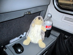 IMG_0500 (Autistic Reality) Tags: virginia commonwealthofvirginia usa us unitedstates unitedstatesofamerica america inside interior indoors abby hedgehog abbythehedgehog mascot travel travelmascot transportation transit train amtrak