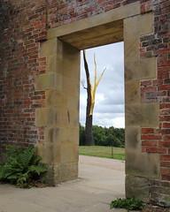 IS7DII_67410 (Ian Slingsby) Tags: yorkshiresculpturepark ysp giuseppepenone alberofolgorato