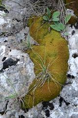 La limace (RarOiseau) Tags: mousse rocher hautesalpes esparron montagne paréidolie