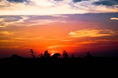 Hasta mañana.... (ameliapardo) Tags: puestasdesol contraluz cielo nubes azul blanco rojo fujixt1 sevilla andalucía españa