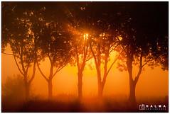 Golden Sunrise (Peter Halma) Tags: halma landschap landscape zonsopkomst sunrise boom tree oranje orange alblasserwaard zon