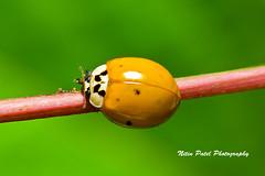 IMG_7839 (nitinpatel2) Tags: macro nature nitinpatel