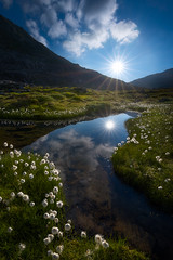 Swiss Morning (AirHaake) Tags: swiss switzerland morning morninglight swissalps mountains vertical foreground flowers water lake pond sunstar clouds idyllic atmosphere