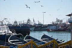Essaouira harbour ships (pan_orama) Tags: marokko maroc morocco essaouira beach harbour seagulls fish sun color travel