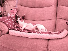 Worn out! (Keith Coldron) Tags: dog sofa asleep rest comfort toys bed