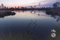 Before sunrise (Storm'sEndPhoto) Tags: kauhanevanpohjankankaankasallispuisto kansallispuisto kauhaneva karvia finland suomi aamu aamuvalo morning morgenlicht nordic landscape landschaft lake järvi calm trees latesummer
