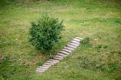 Stairs to Nowhere (Valery Goloha) Tags: travel лето путешествие landscape tree ukraine nature grass