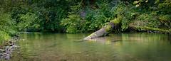Wasser im Fluss (Jensens PhotoGraphy) Tags: deutschland germany badenwürttemberg fluss bach landschaft landscape langzeitbelichtung wasser water baum pflanzen steine ufer grün green