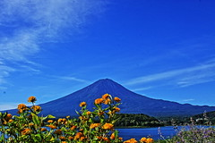 Mt.Fuji Oishi Park (ULTRA Tama) Tags: mtfuji oishi park mtfujiwhc japan shizuoka fuji todays dayliphoto instadaily photogenic igjapan loversnippon worldcaptures flickrfriday welovef august 2018 worldheritage tabijyo genicmag retripjapan retripshizuoka explorejapan traveljapan radiof artofimages ftimes genictravel geniclife genicblue genicjapan genicphoto genictown genicsummer tabijyosummer tabijyomaptwn tabijyotravel 1001 nights 1001nights colourartaward
