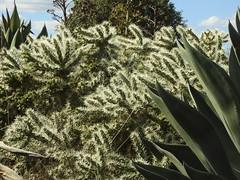 Cactus Country, Strathmerton 1425 (Lesley A Butler) Tags: victoria strathmerton cactuscountry cacti australia