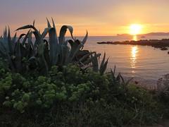 Calabona (giòvanna) Tags: sardegna alghero mare orizzonte cielo panorama tramonto vegetazione calabona crepuscolo